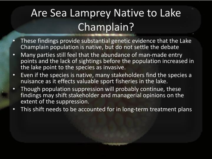 Are Sea Lamprey Native to Lake Champlain?