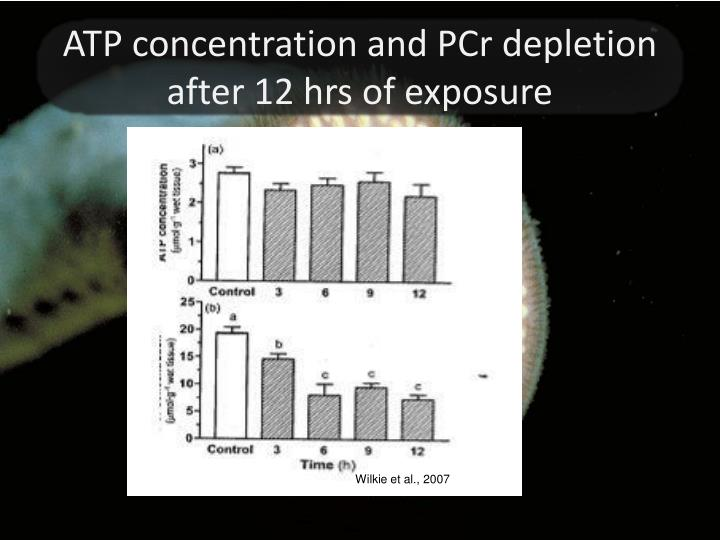 ATP concentration and PCr depletion after 12 hrs of exposure