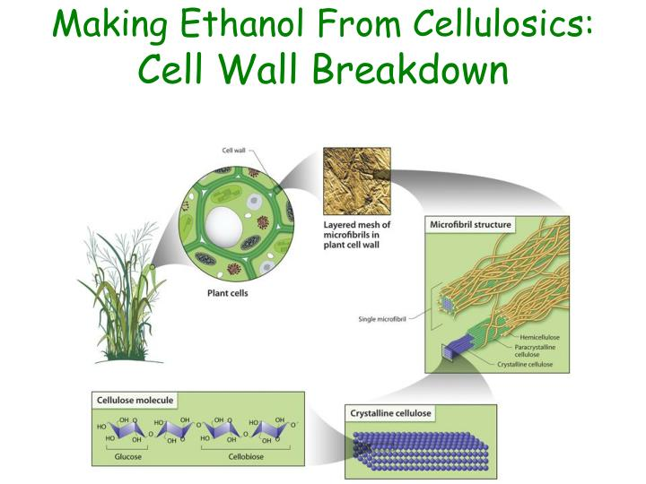 Making Ethanol From Cellulosics: