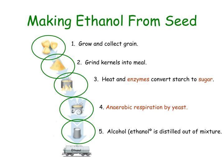 Making Ethanol From Seed