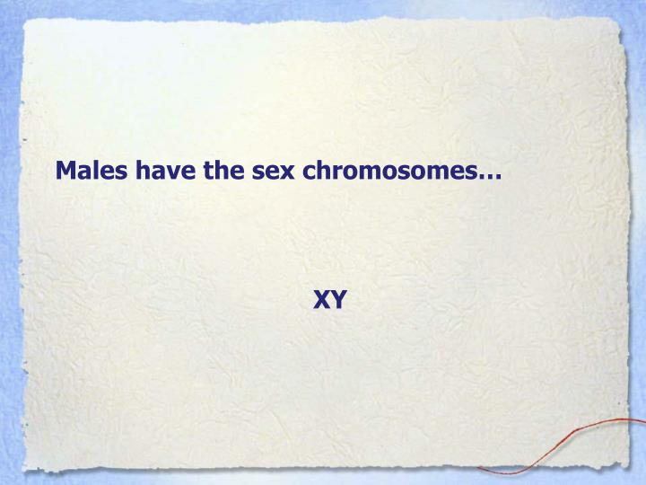 Males have the sex chromosomes…
