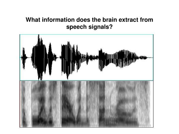 What information does the brain extract from speech signals?