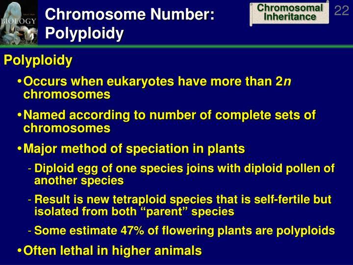 Chromosome Number: