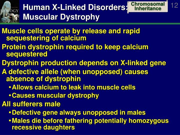 Human X-Linked Disorders: