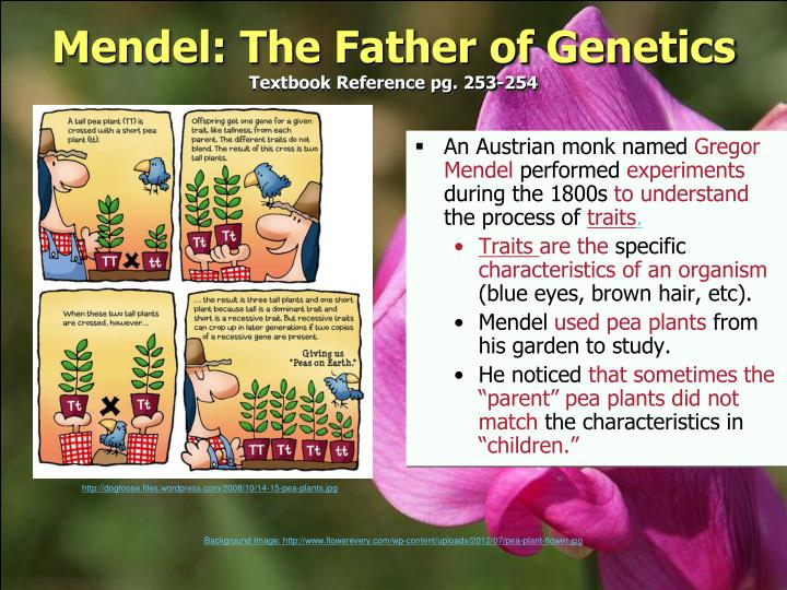 Mendel: The Father of Genetics