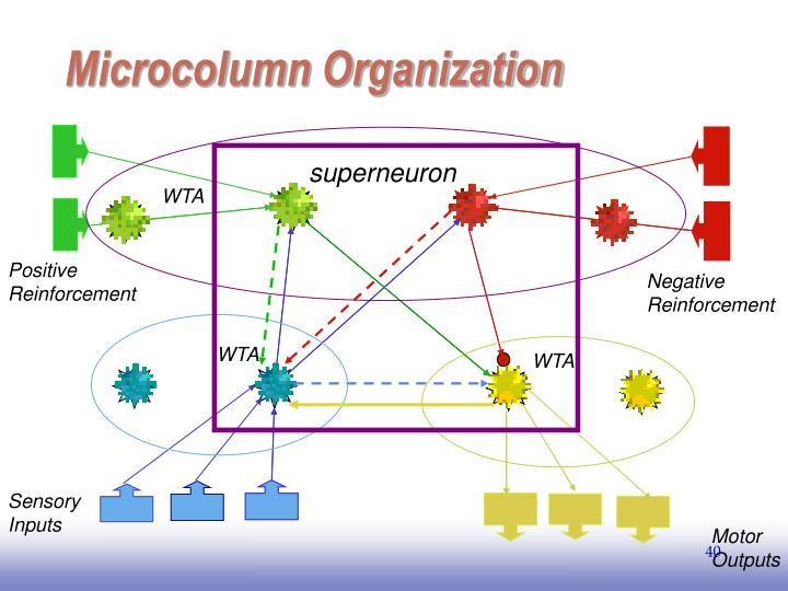 Microcolumn Organization