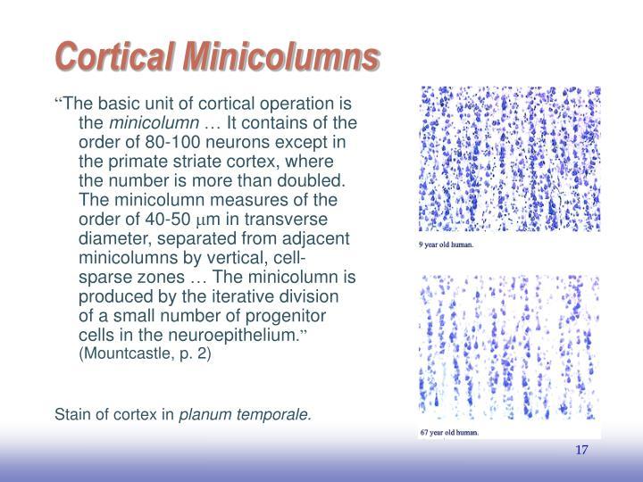 Cortical Minicolumns