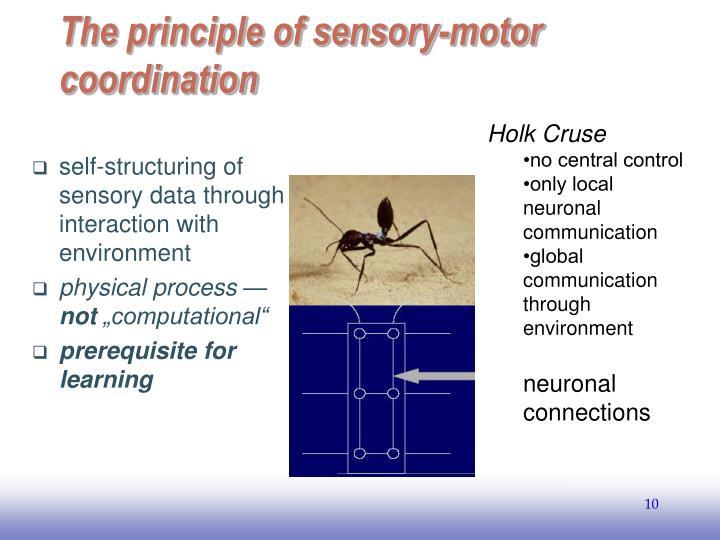 The principle of sensory-motor coordination