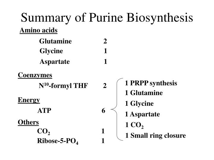 Summary of Purine Biosynthesis