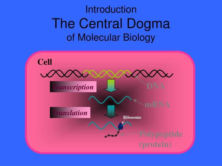 introduction the central dogma of molecular biology n.