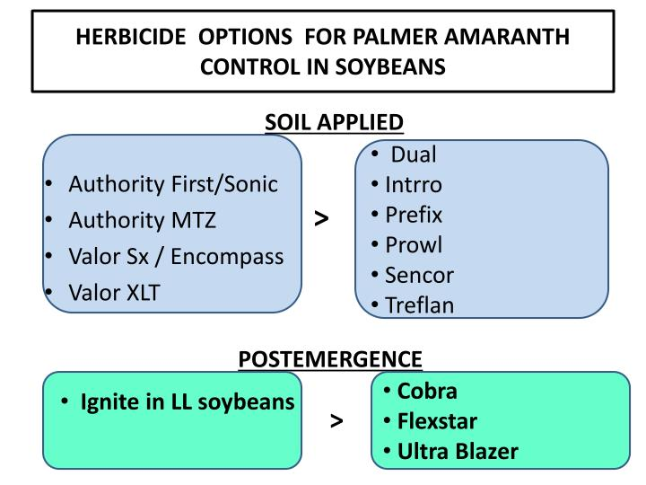 HERBICIDE  OPTIONS  FOR PALMER AMARANTH