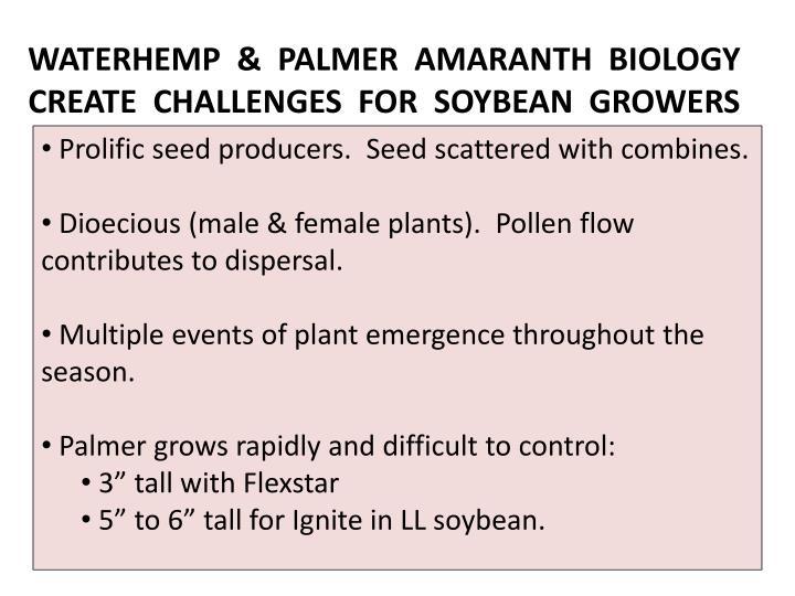 WATERHEMP  &  PALMER  AMARANTH  BIOLOGY CREATE  CHALLENGES  FOR  SOYBEAN  GROWERS