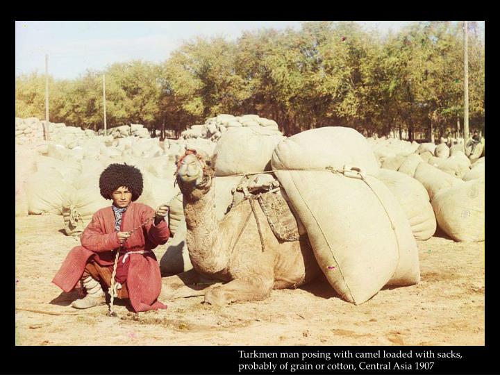Turkmen man posing with camel loaded with sacks, probably of grain or cotton, Central Asia 1907