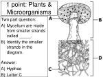 1 point plants microorganisms19