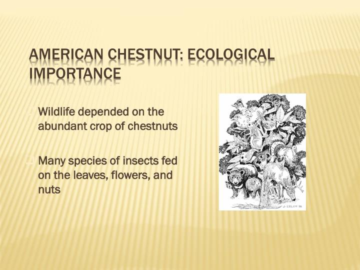 American Chestnut: Ecological Importance