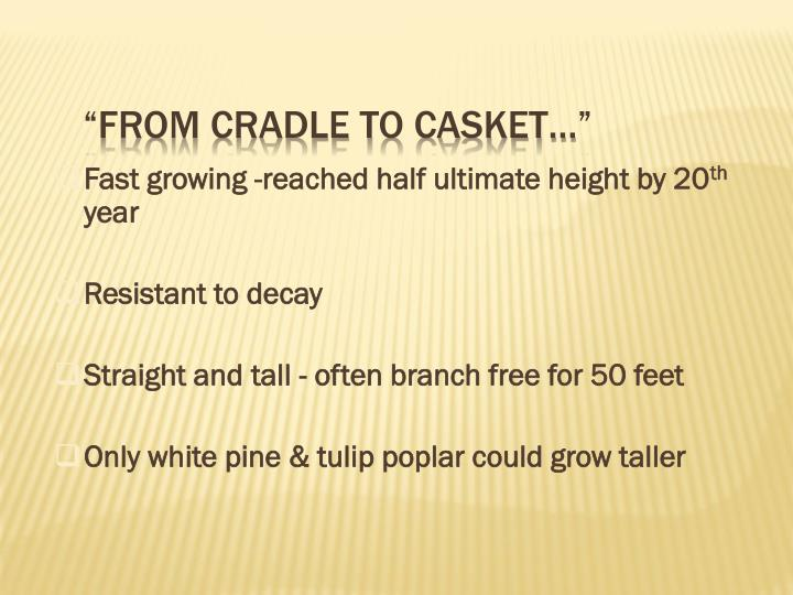 Fast growing -reached half ultimate height by 20