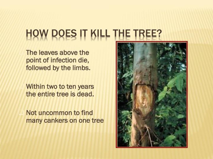 How does it kill the tree?