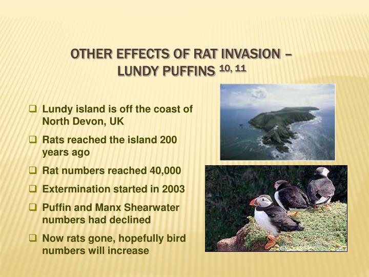 Other effects of rat invasion –