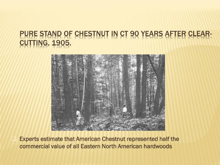 Pure stand of Chestnut in CT 90 years after clear-cutting, 1905.