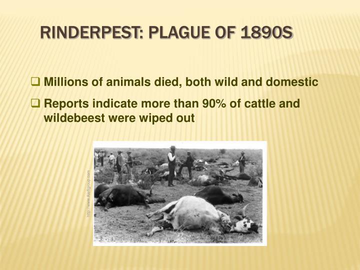 Rinderpest