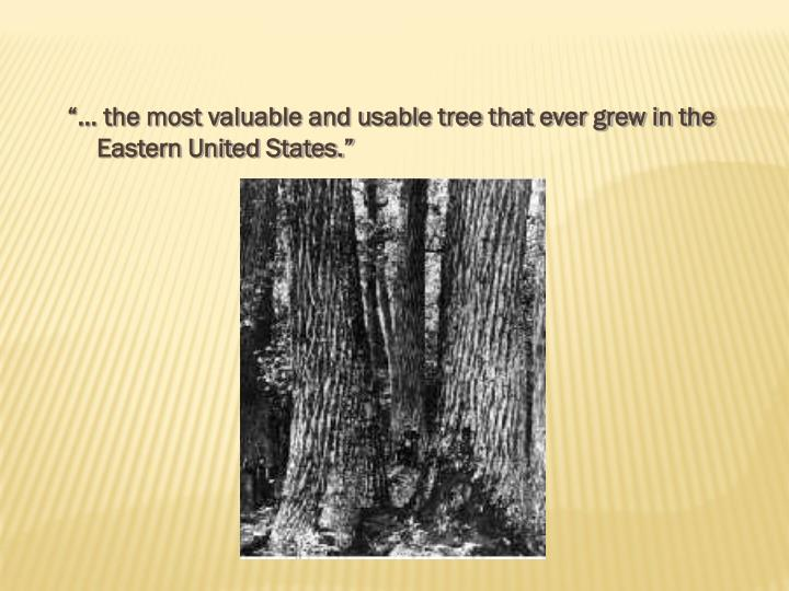 """""""… the most valuable and usable tree that ever grew in the Eastern United States."""""""