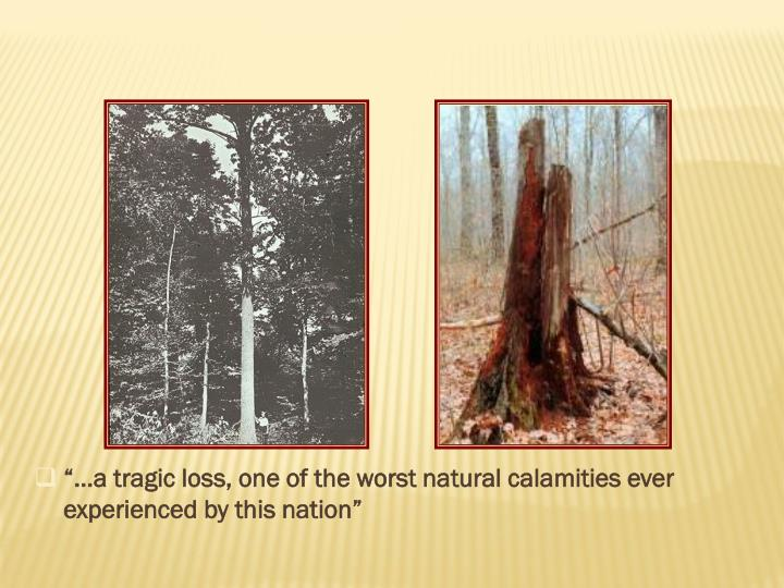 """""""…a tragic loss, one of the worst natural calamities ever experienced by this nation"""""""