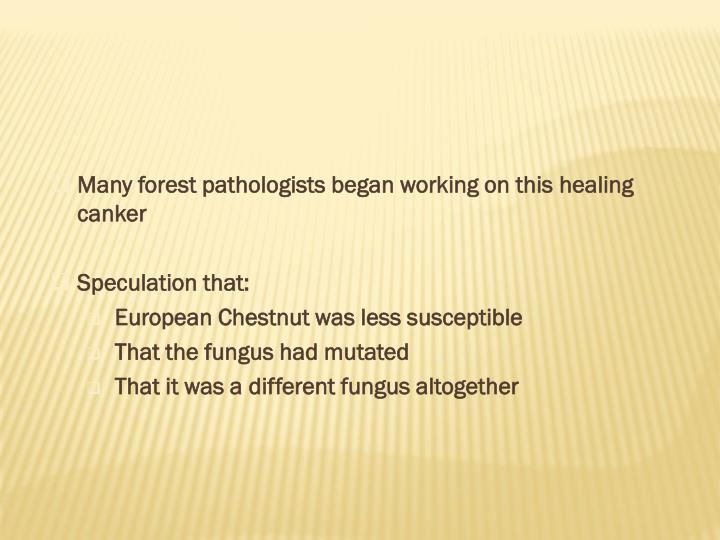 Many forest pathologists began working on thishealing canker