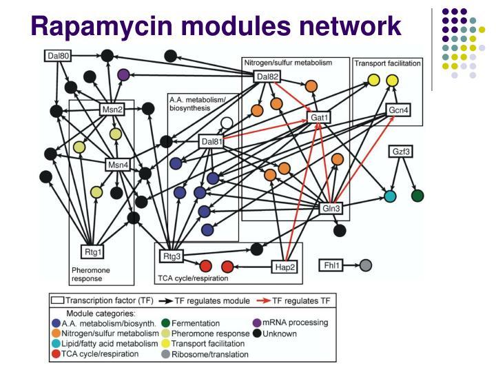 Rapamycin modules network