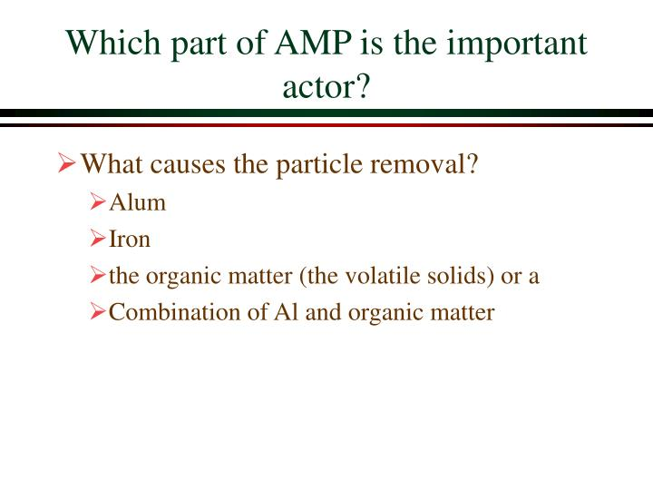 Which part of AMP is the important actor?