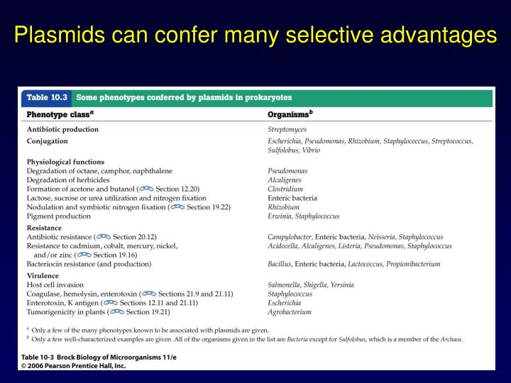 Plasmids can confer many selective advantages