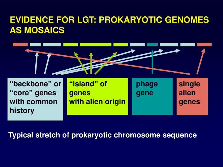 EVIDENCE FOR LGT: PROKARYOTIC GENOMES AS MOSAICS