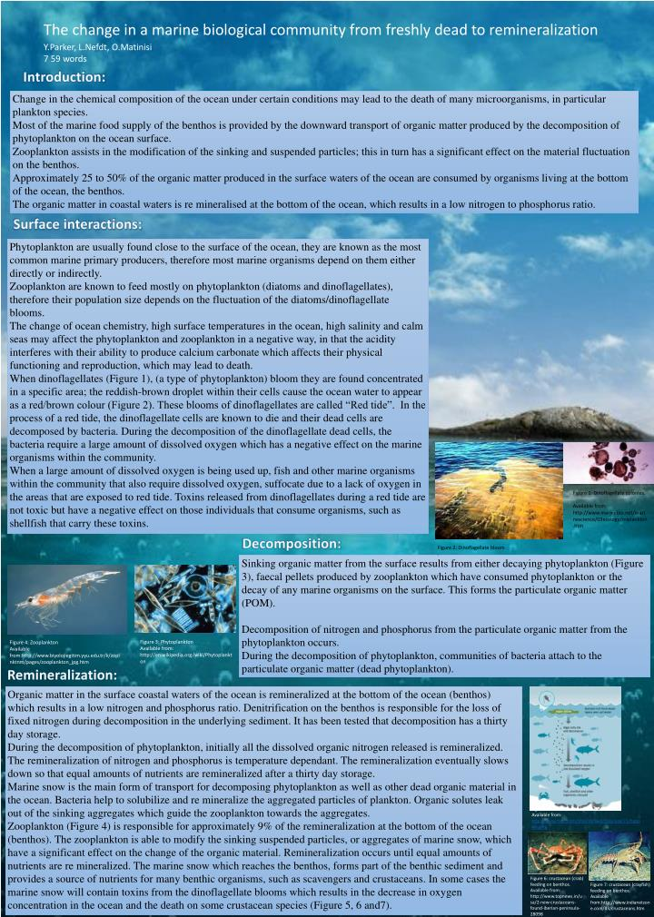 The change in a marine biological community from freshly dead to remineralization