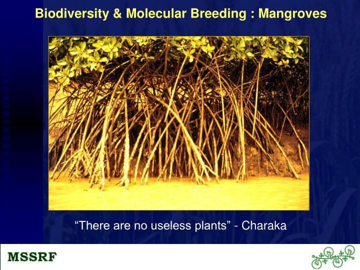 Biodiversity & Molecular Breeding : Mangroves