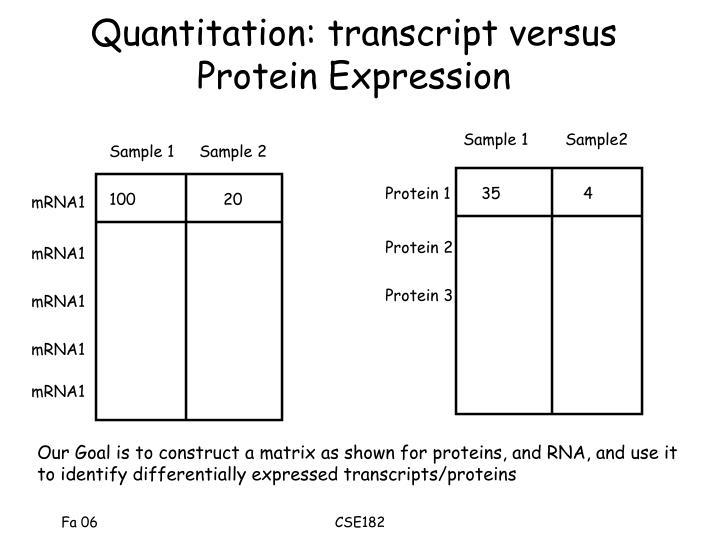 Quantitation: transcript versus Protein Expression