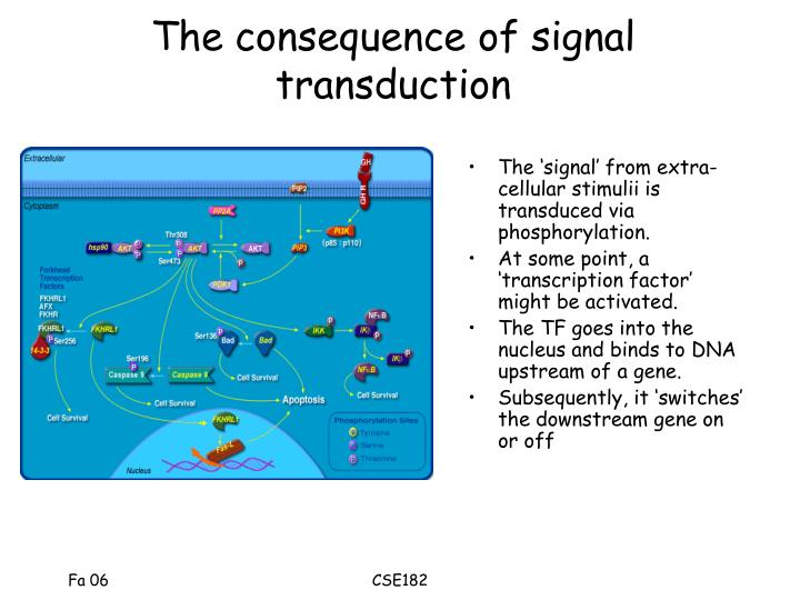 The consequence of signal transduction