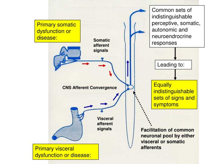 Common sets of indistinguishable perceptive, somatic, autonomic and neuroendrocrine responses