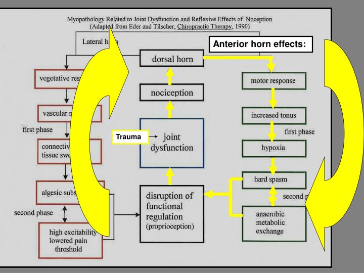 Anterior horn effects: