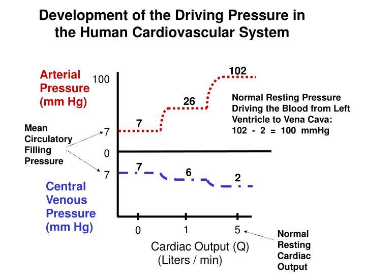 normal resting cardiac output