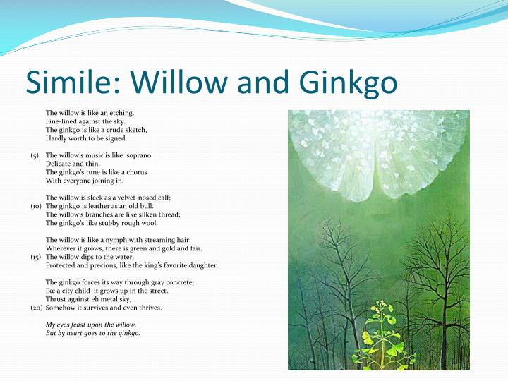 """simile willow and ginkgo"""