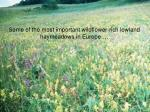 some of the most important wildflower rich lowland haymeadows in europe