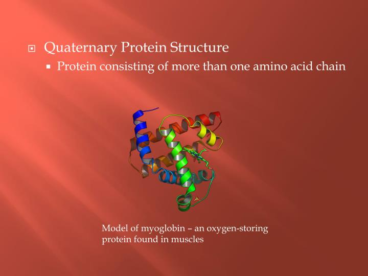 Quaternary Protein Structure