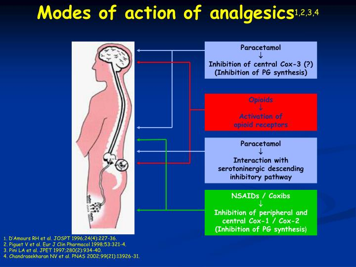 Modes of action of analgesics