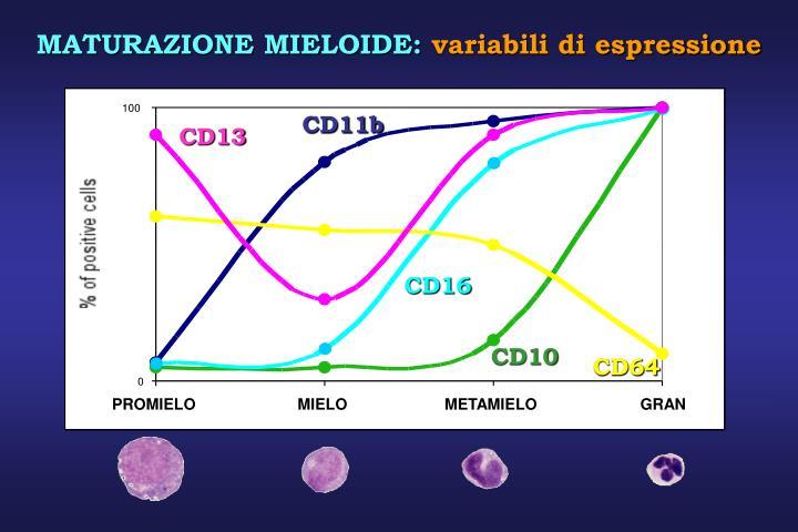 CD11b