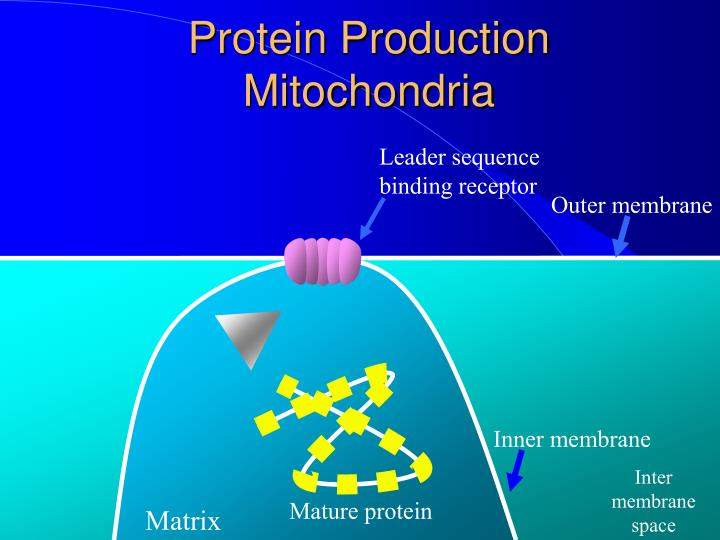 Protein Production