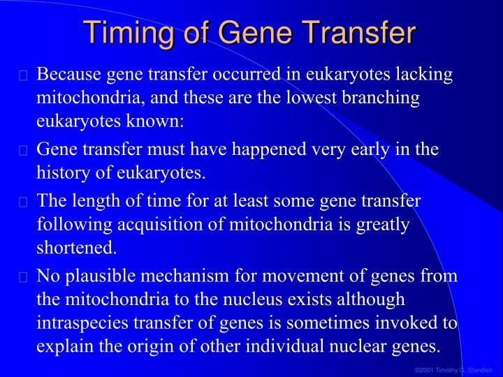 Timing of Gene Transfer
