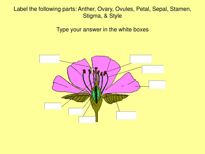 Label the following parts: Anther, Ovary, Ovules, Petal, Sepal, ...