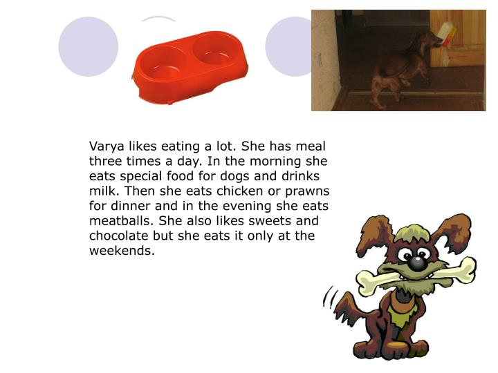 Varya likes eating a lot. She has meal three times a day. In the morning she eats special food for dogs and drinks milk. Then she eats chicken or prawns for dinner and in the evening she eats meatballs. She also likes sweets and chocolate but she eats it only at the weekends.