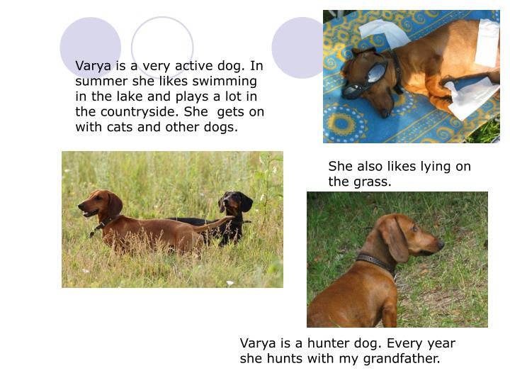 Varya is a very active dog. In summer she likes swimming in the lake and plays a lot in the countryside. She  gets on with cats and other dogs.