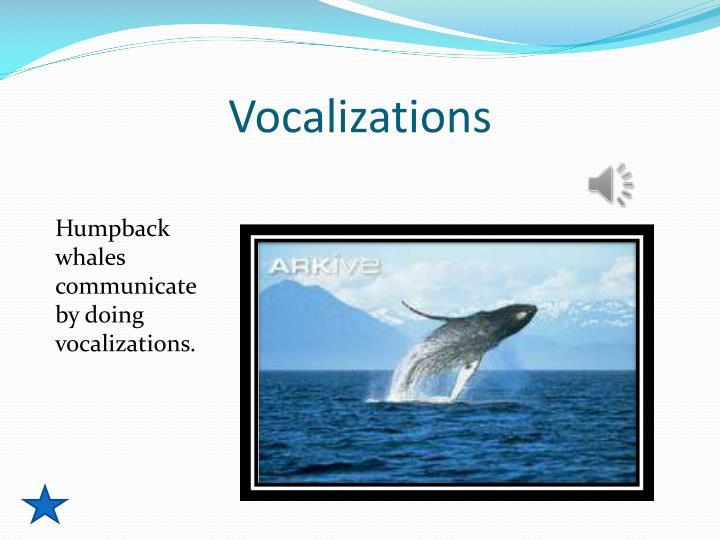 Vocalizations