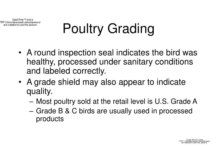 Poultry Grading